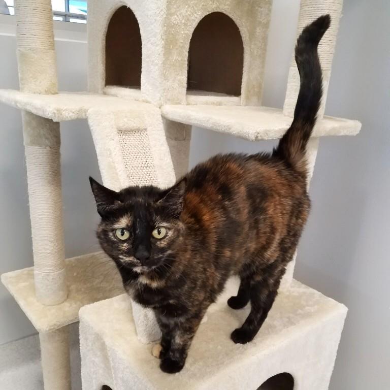 Cat Boarding Austin TX | BarkandZoom com