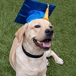 photo of dog with graduation cap on