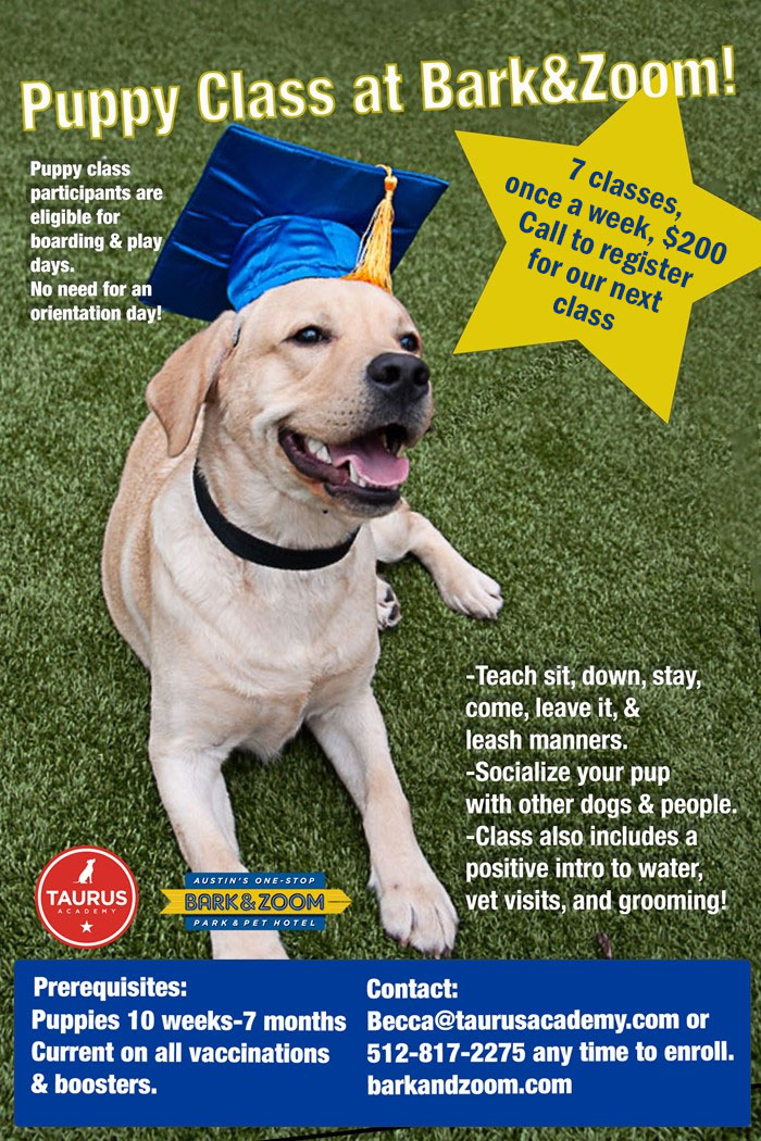 puppy class flyer with details